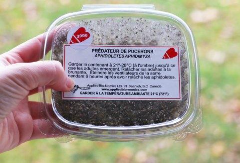 aphidoletes-aphidimyza-aphids-pucerons