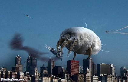 Bed-Bug-Attacks-a-City--48734