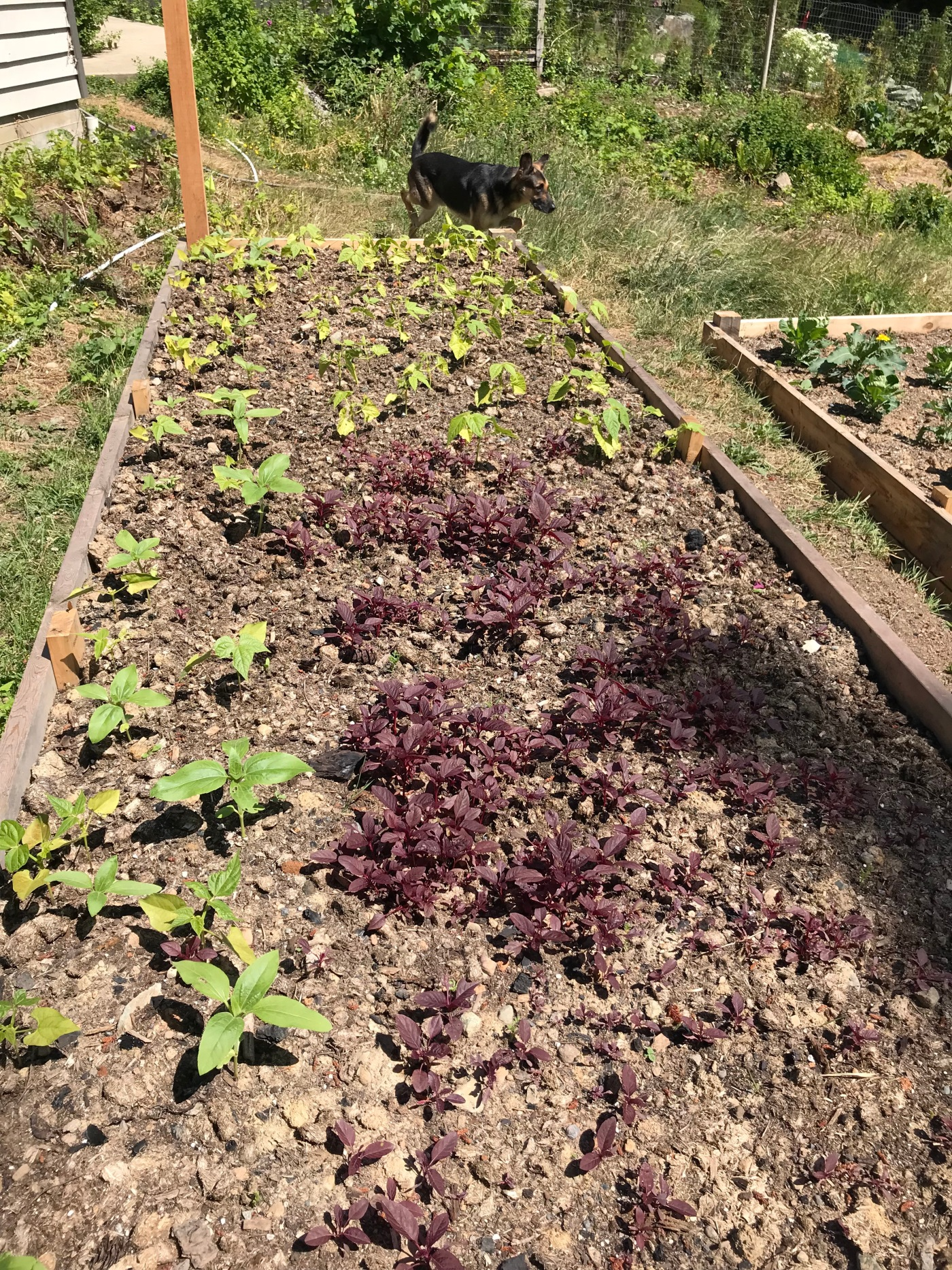 Filling the Garden Beds – My Corner of the World