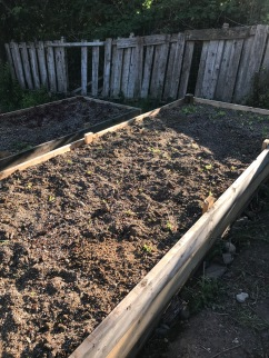 a freshly seeded and promptly trampled lettuce bed